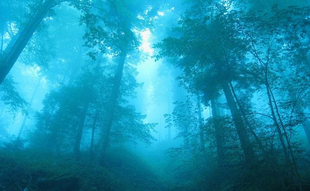 02105_blueforest_1920x1200